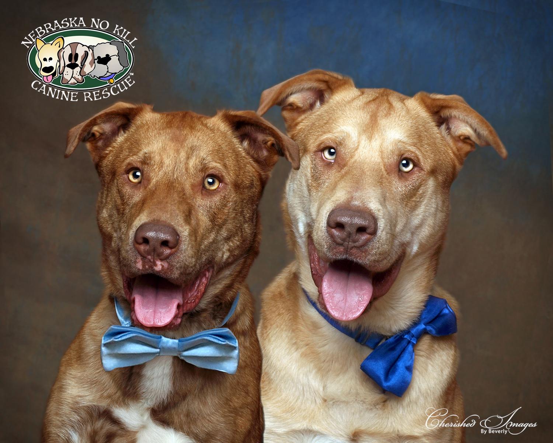 Bucky & Spike