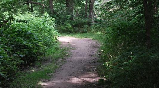 Wilderness Park Trails