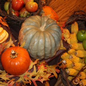photo of pumpkins, gourds and autumn leaves