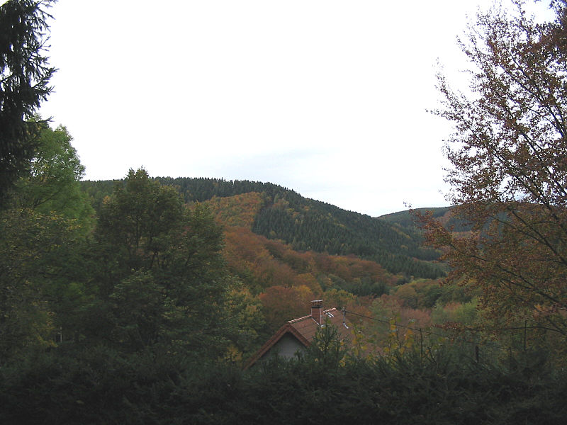 The Hürtgen Forest today