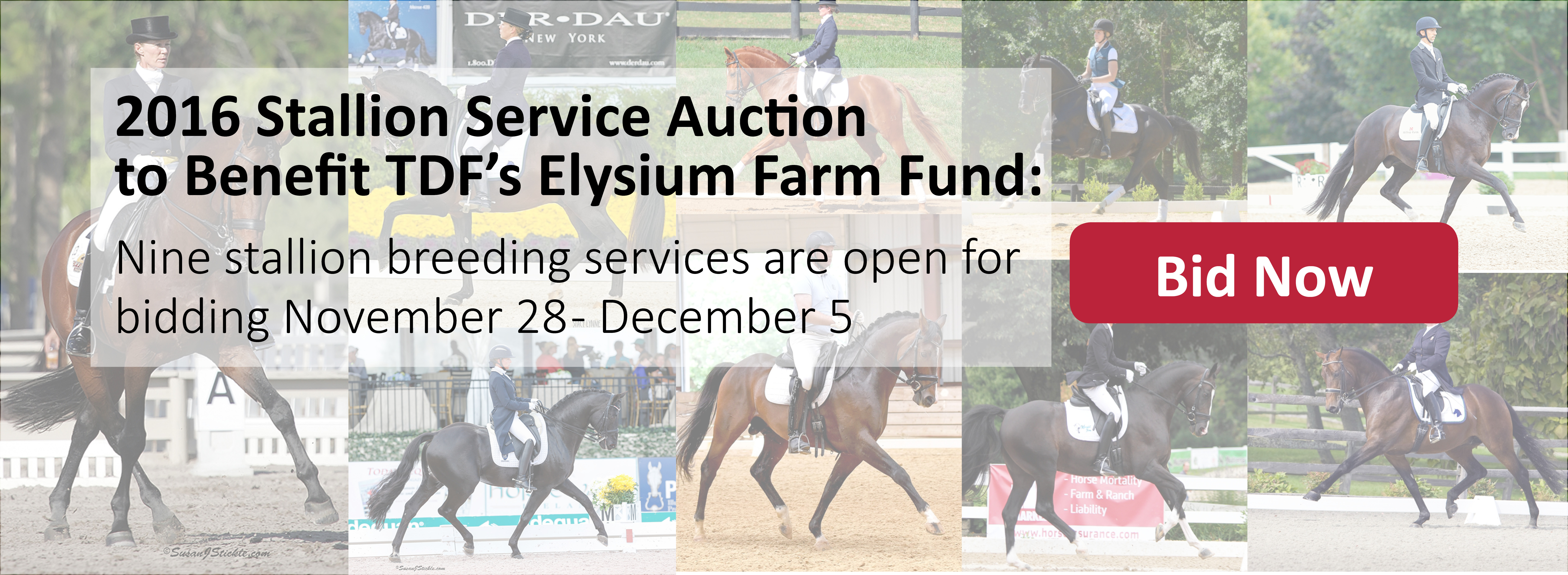 2016 Stallion Service Auction Spotlight