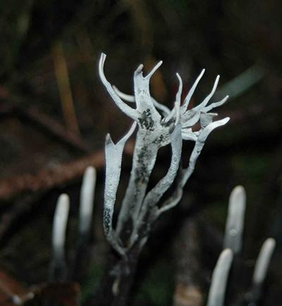 Mushroom photo gallery