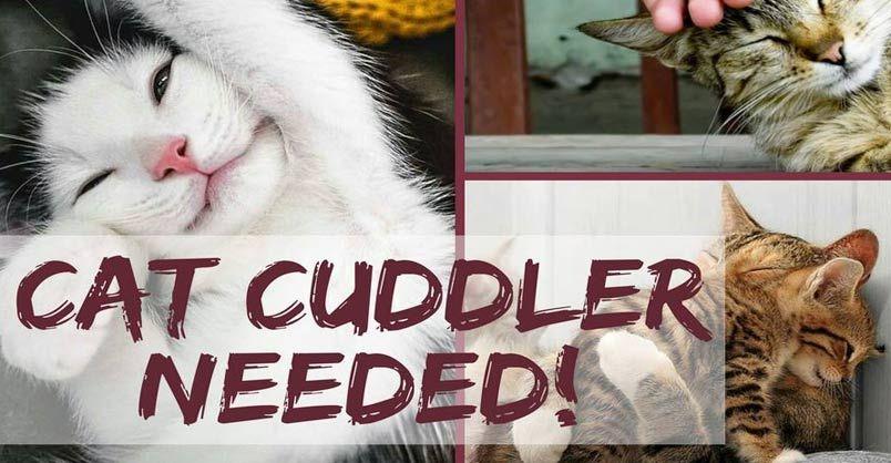 Dog Walker/Cat Cuddler/Enrichment