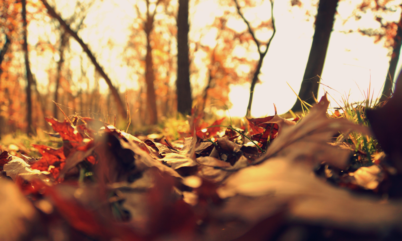 fall leaves autumn seasonal