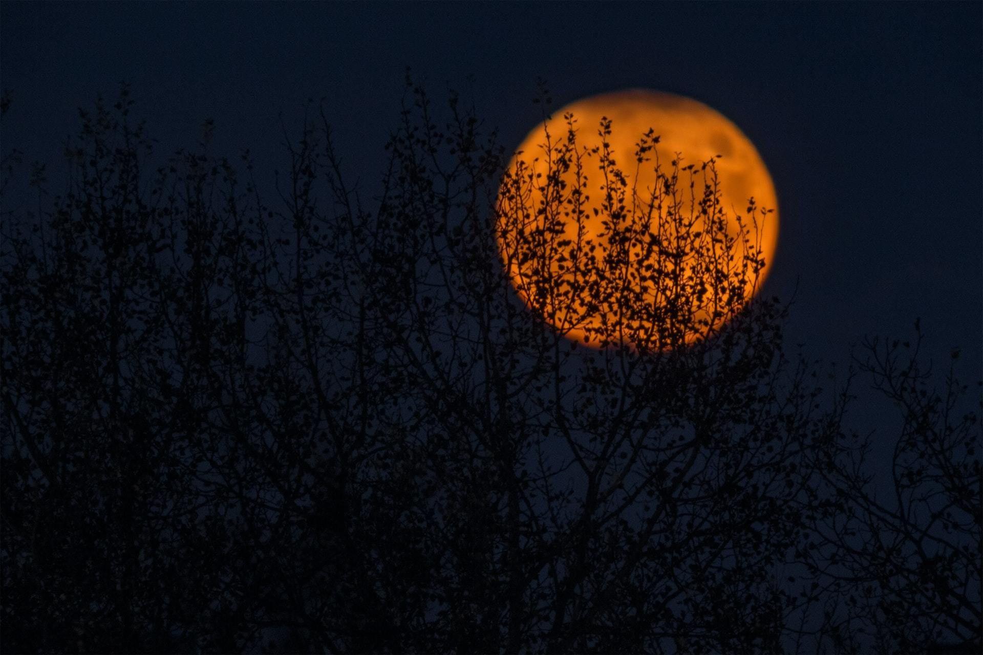 A deep dark night with an orange Halloween moon.