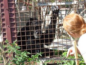 A Caregiver  interacts with Tatu through the fencing outdoors