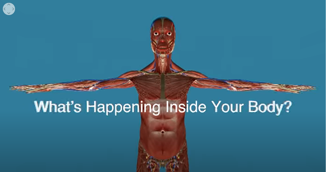 360 View Inside The Body