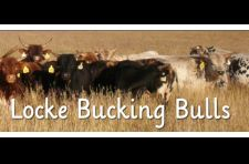 Locke Bucking Bulls