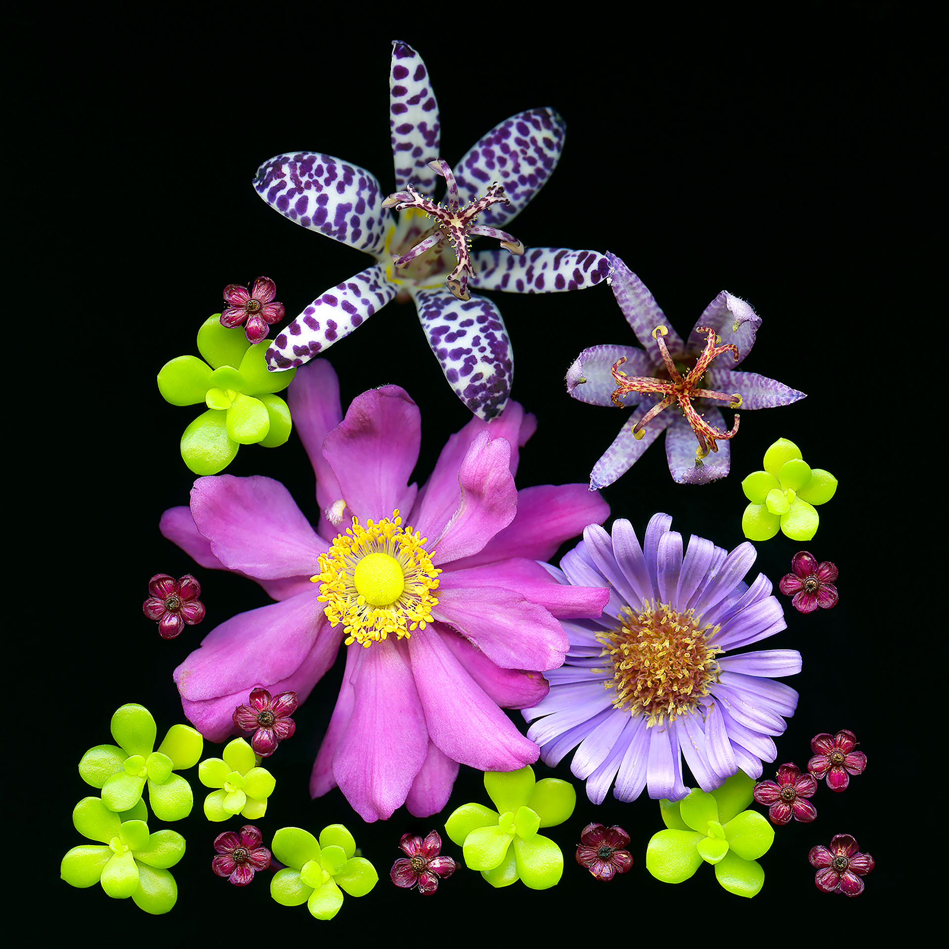 Flower Composition 1