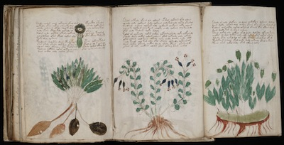 """Using AI to Uncover Ancient Mysteries"" - U of Alberta & The Voynich Manuscript"