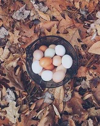 Hidden in the Egg- Cole's Happy Ending