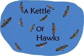 Register for March 4 class: A Kettle of Hawks