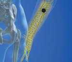 Ulnar Nerve & Pinky Finger Pain