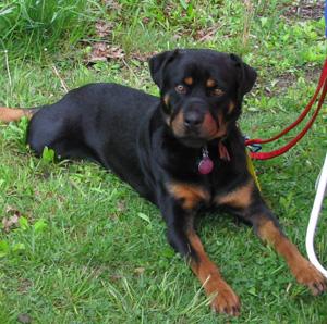 Planned Pethood Inc Events Dog Adoption Days
