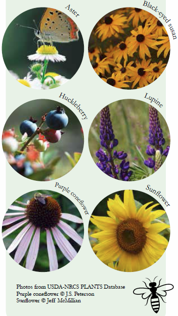 Northeastern United States Native Plants That Attract Pollinators