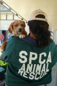 HELPING ANIMALS LOCALLY