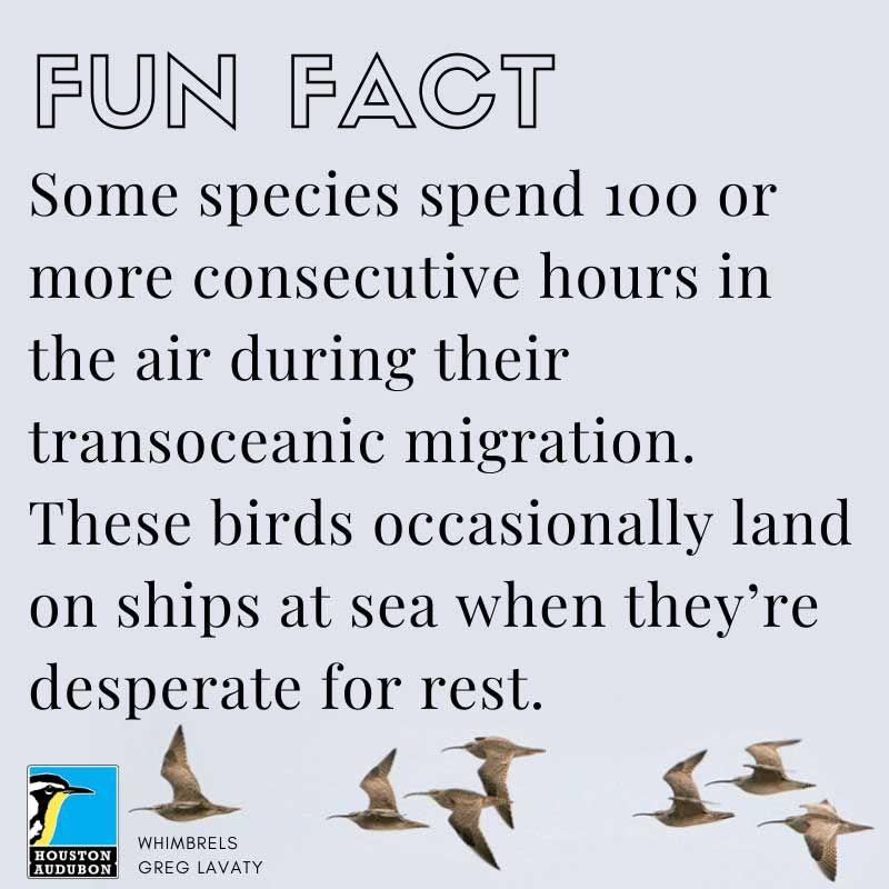 Transoceanic migration fun fact