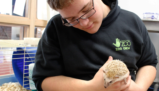 Zoo Crew member holding and taking care of a hedgehog.