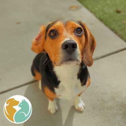 LUNA - Adopted 09/18!