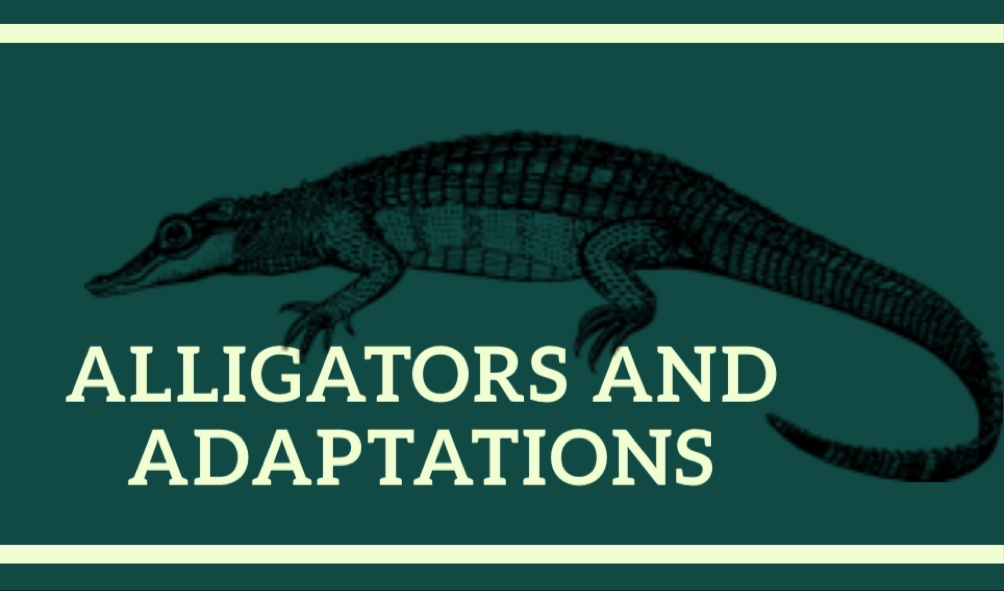 Alligators and Adaptations (ages 9-13)