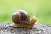 Revenge of the Snail (mail)