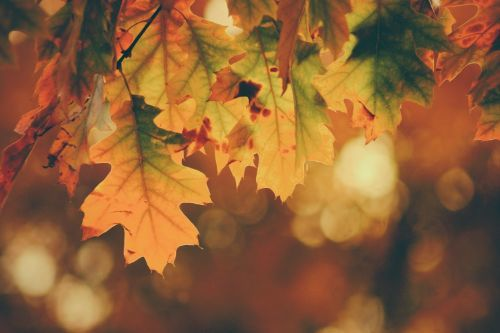 Fall in Love with These Fall Marketing Ideas for Your Small Business