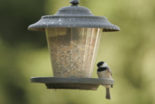 Build a Bird Feeder