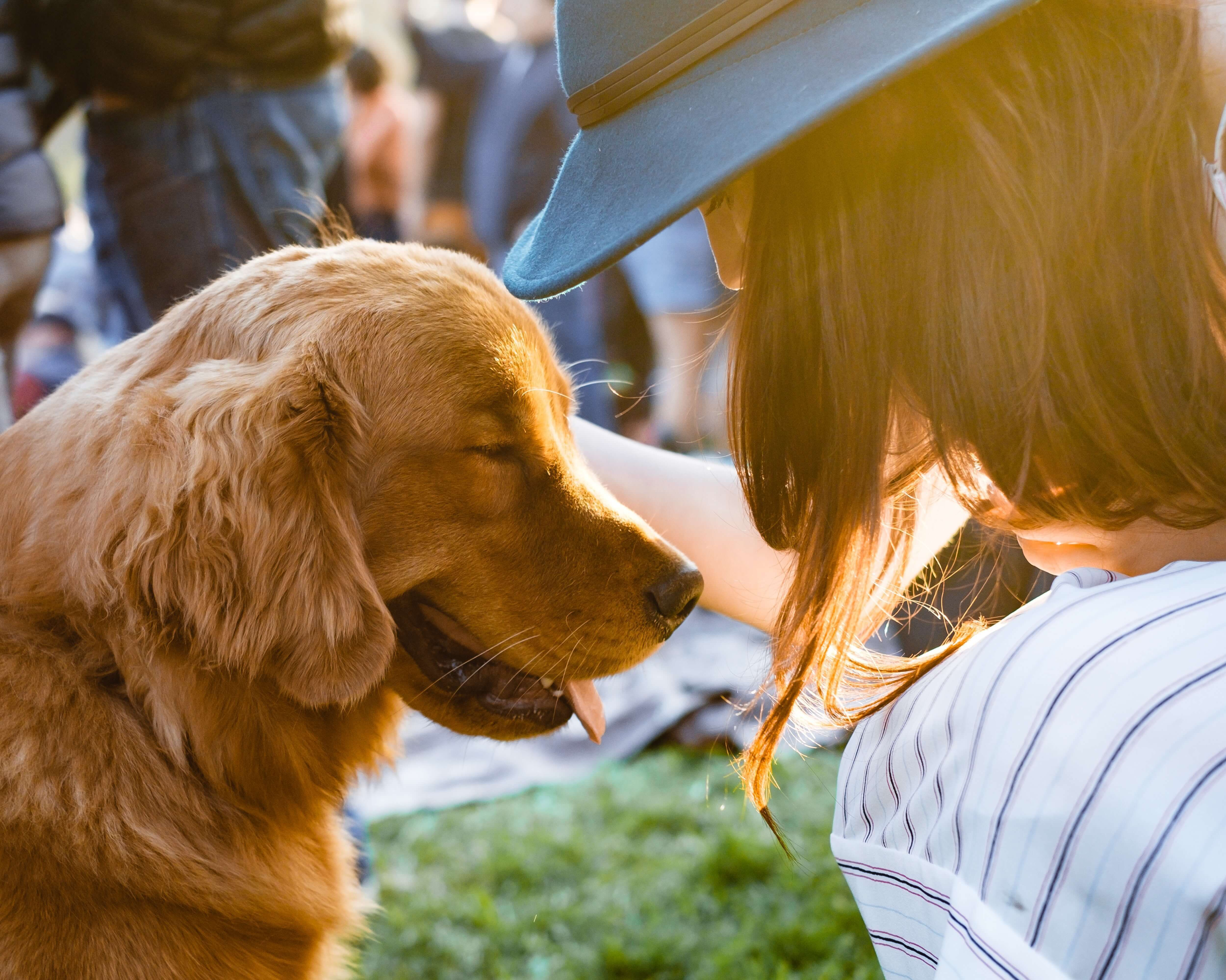 How To Help a Dog That's Missed Early Socialization