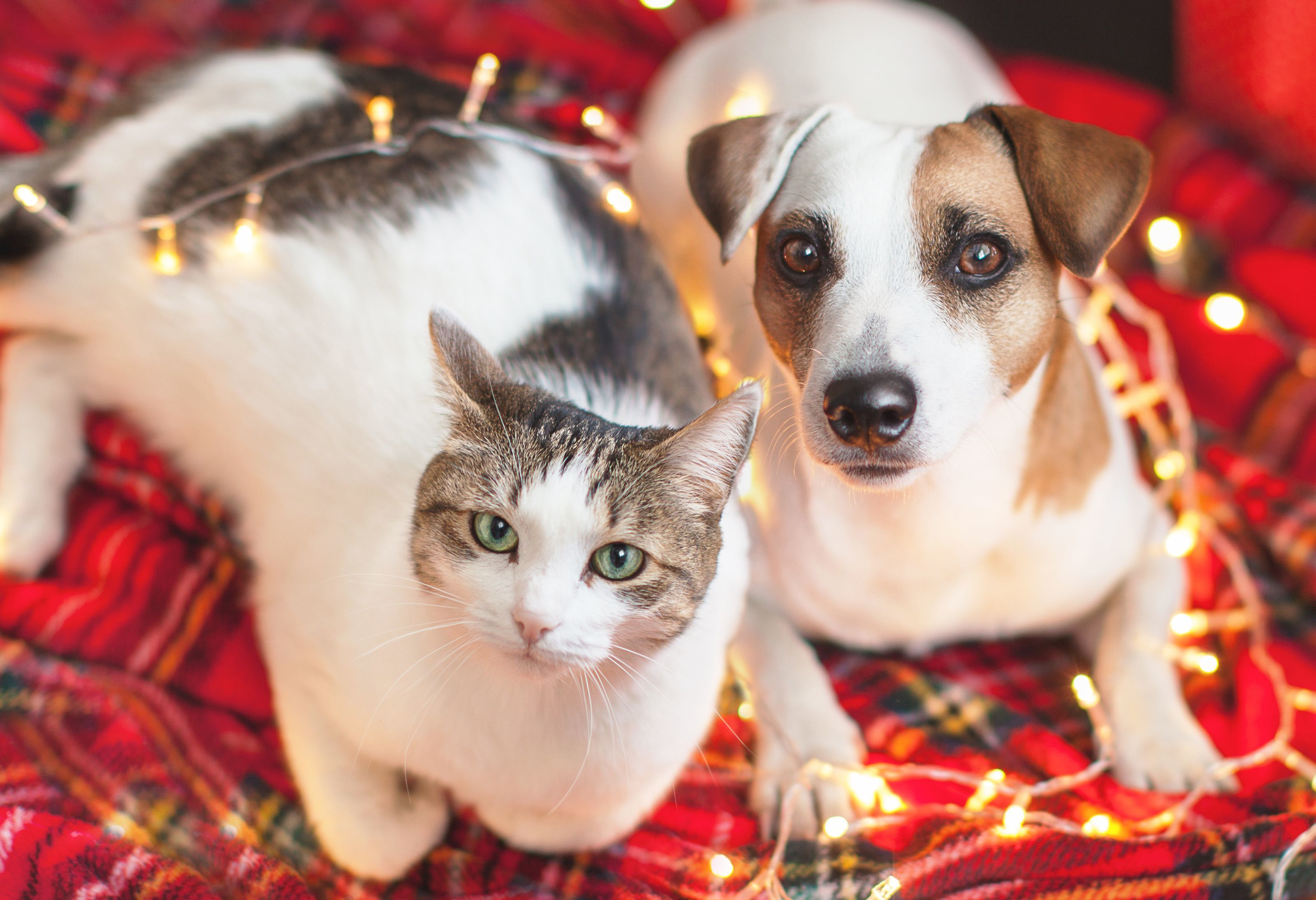 Send some Holiday Cheer to Homeless Pets in Need