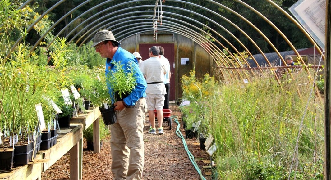 Save 50% on plants at the Native Plant Nursery! Through October 29...