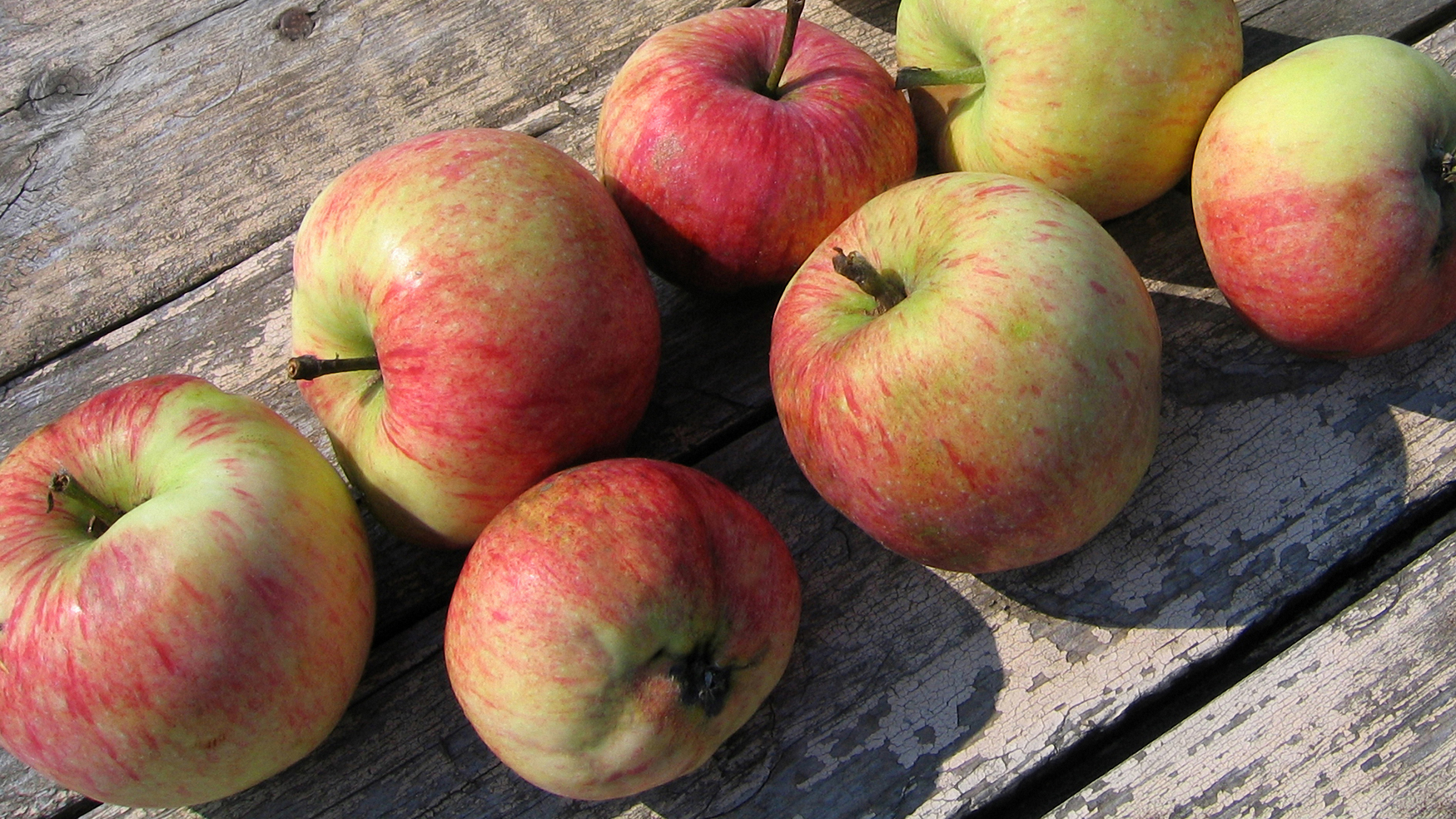 Fall means crisp apples in New England