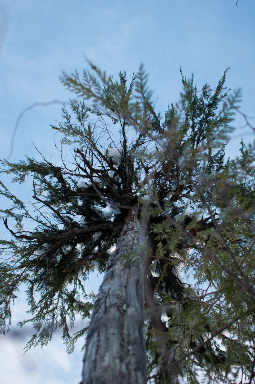 Whitman 20, Cedar Blue Blue Sky