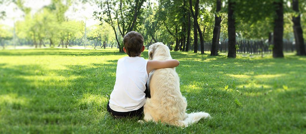 Pet Prevention