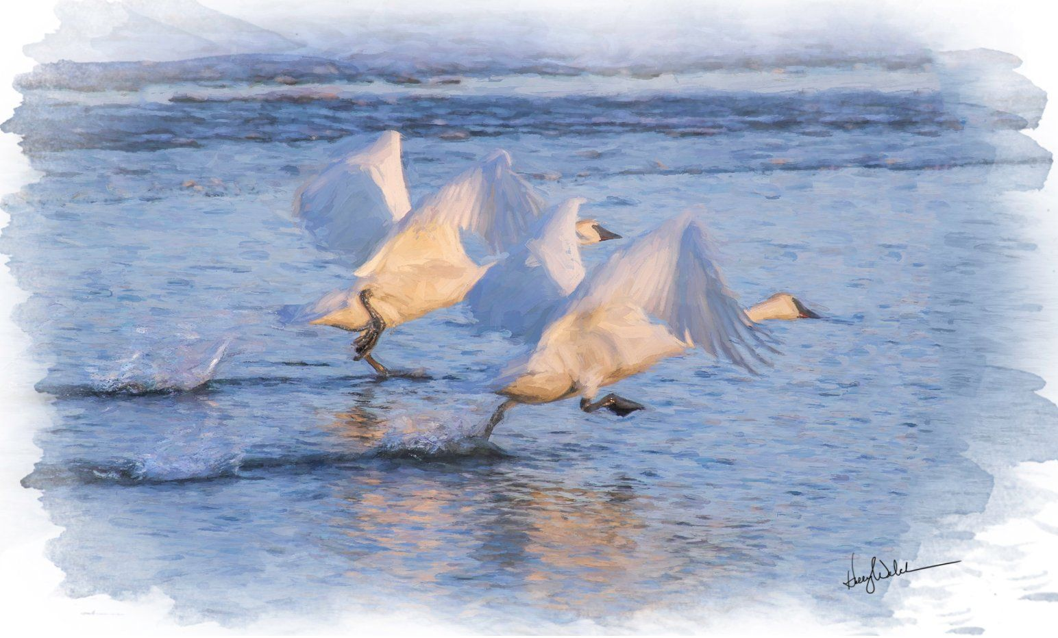 The Trumpeter Swan website has links to find out how to see Trumpeter Swans near you