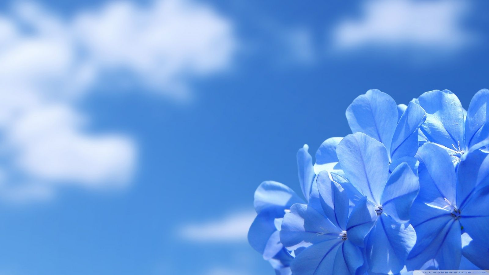Beautiful Flower-Our Mission and History-Blue Flowers