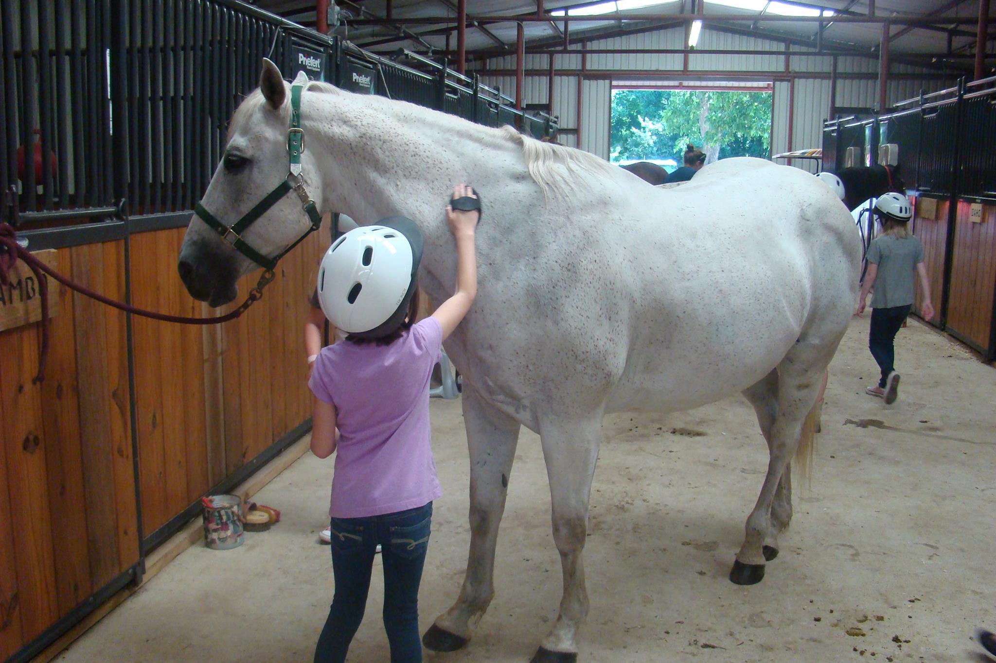 Little Girl Large Horse