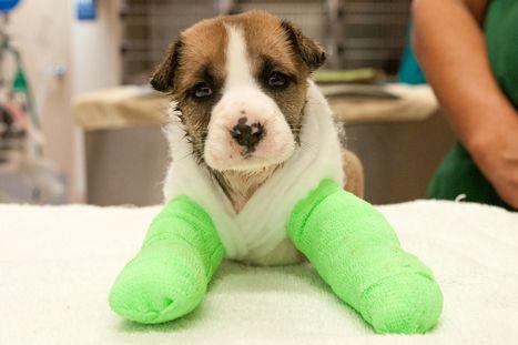Help Pets Like Emma