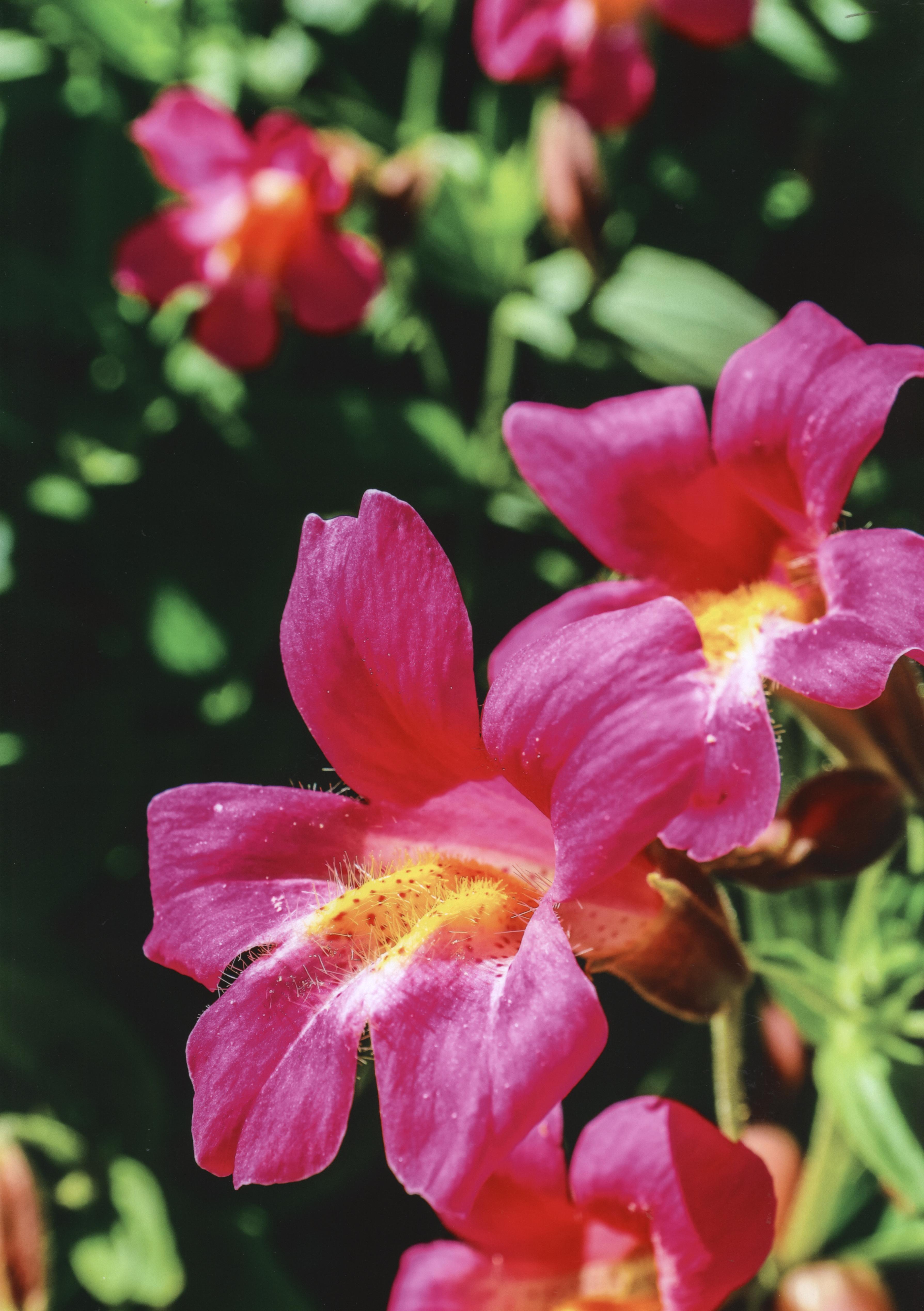 1st - Flora