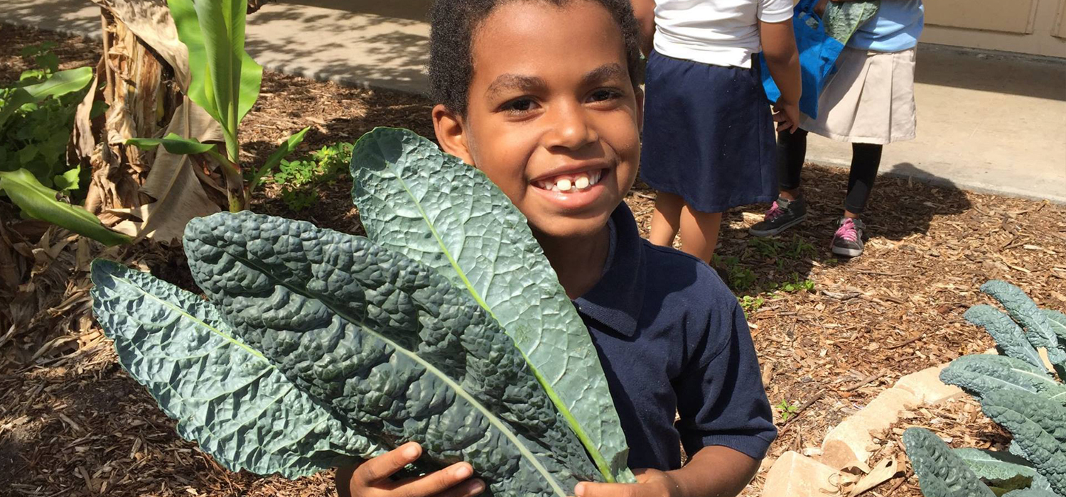 Food Forests in Schools