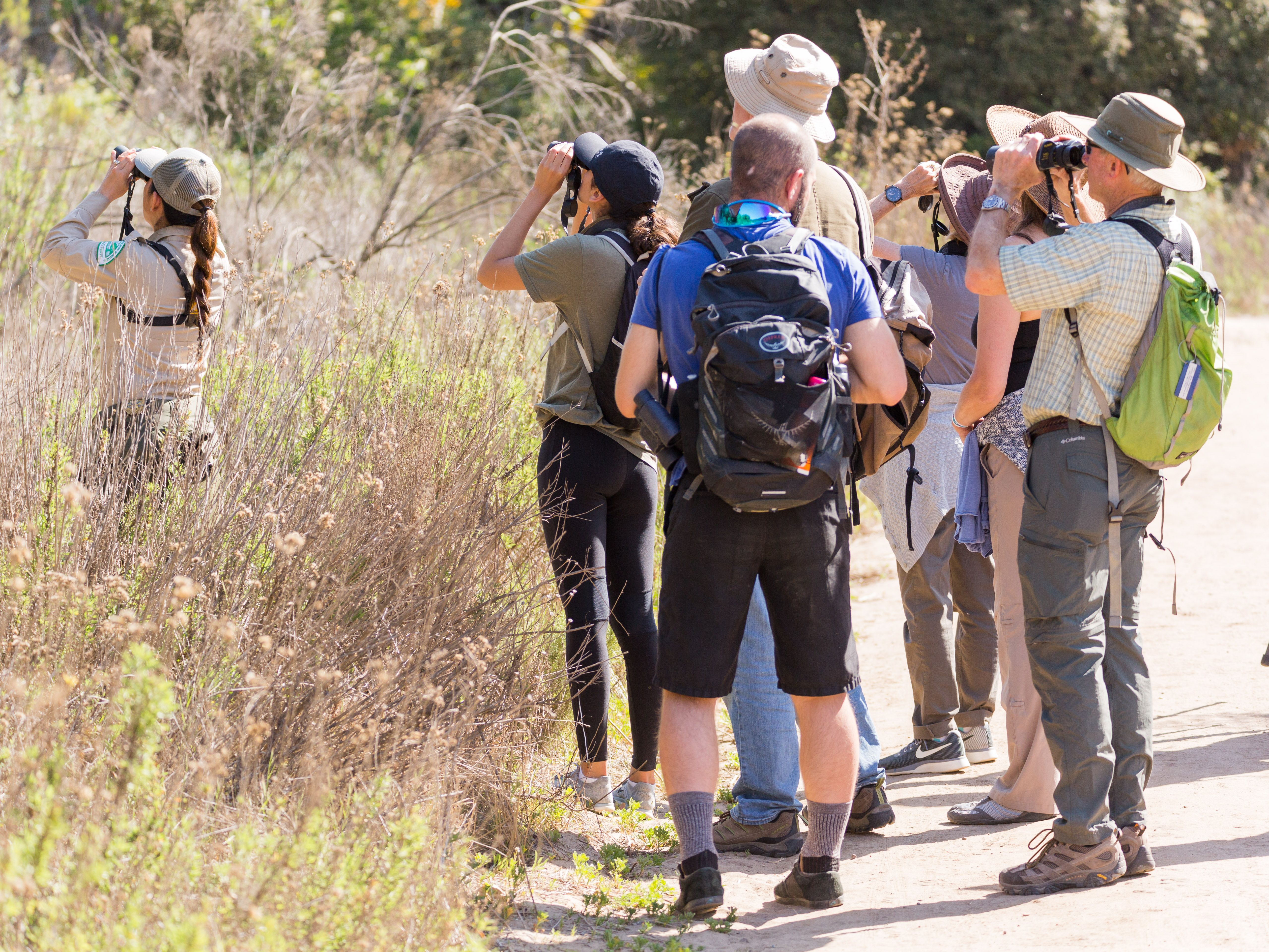 Monthly Bird Walks at Tecolote Canyon