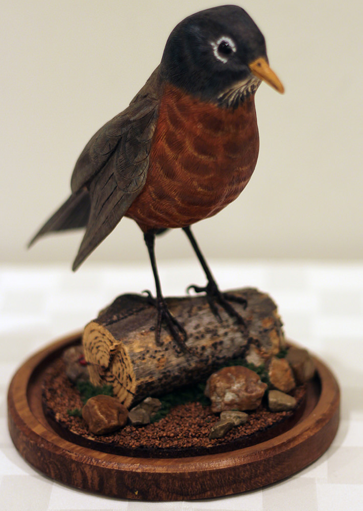 """American Robin"" - Donated by artist Dr. William Black"