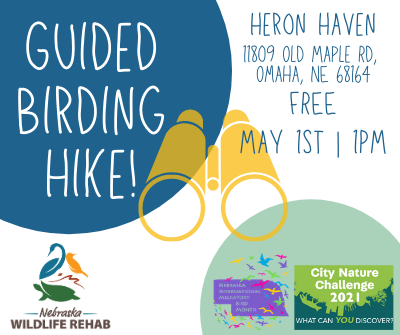Guided Bird Hike- A City Nature Challenge and NE Migratory Bird Month Event