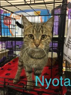 Nyota adopted 031818