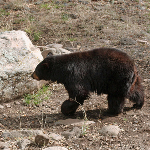 Do you have advice for being safe in bear country?