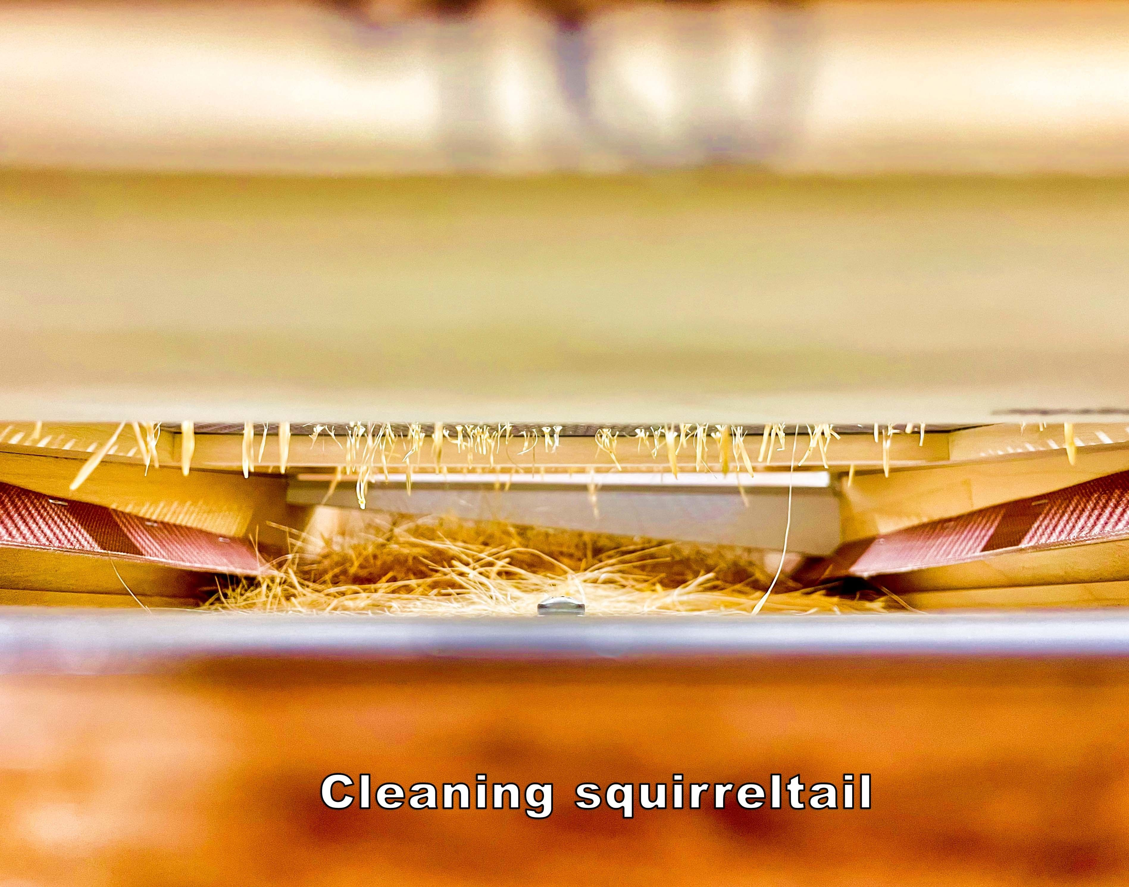 Cleaning Bottlebrush squirreltail seeds