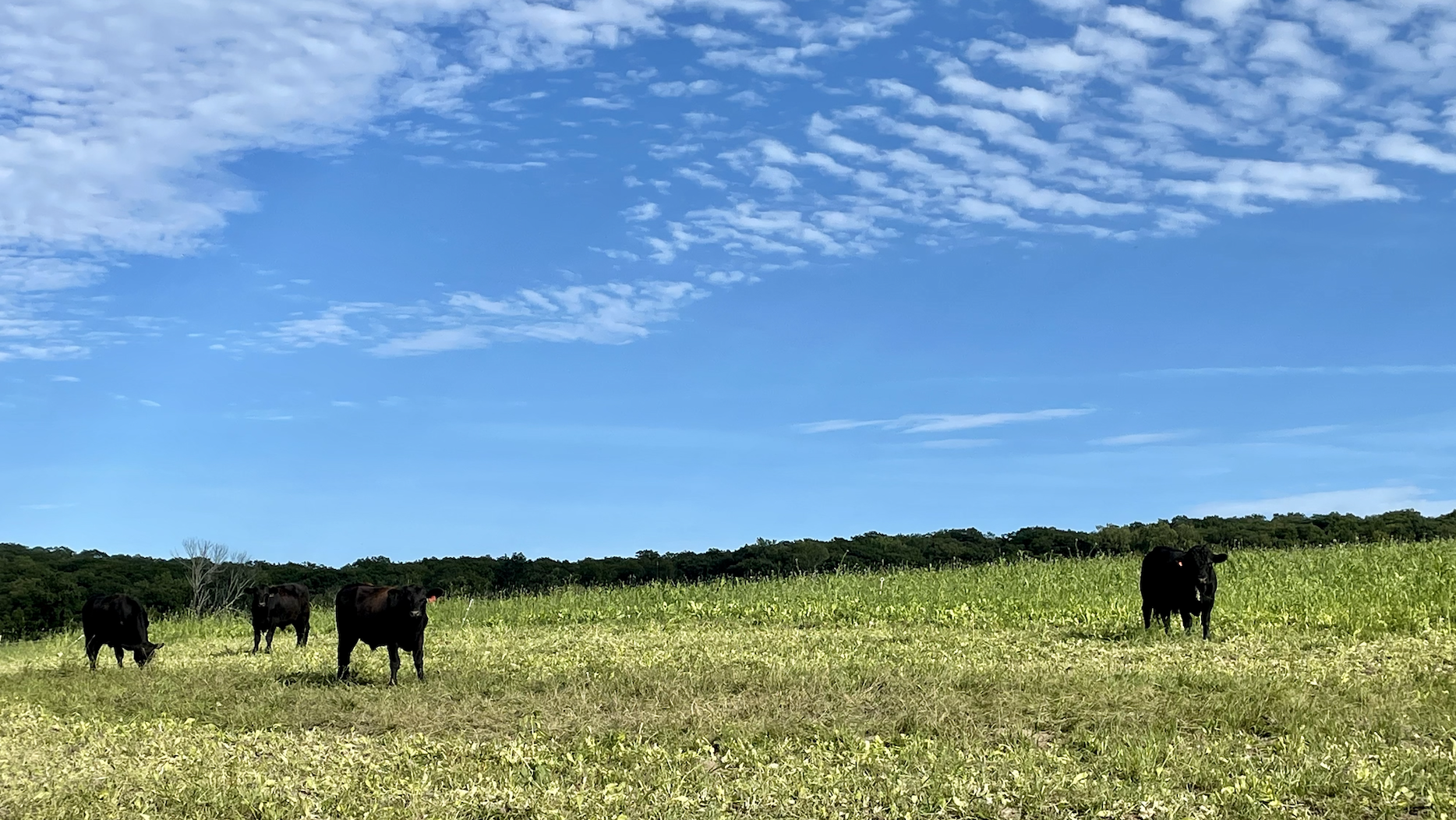 Pasture Renovation: Summer on Middle Field