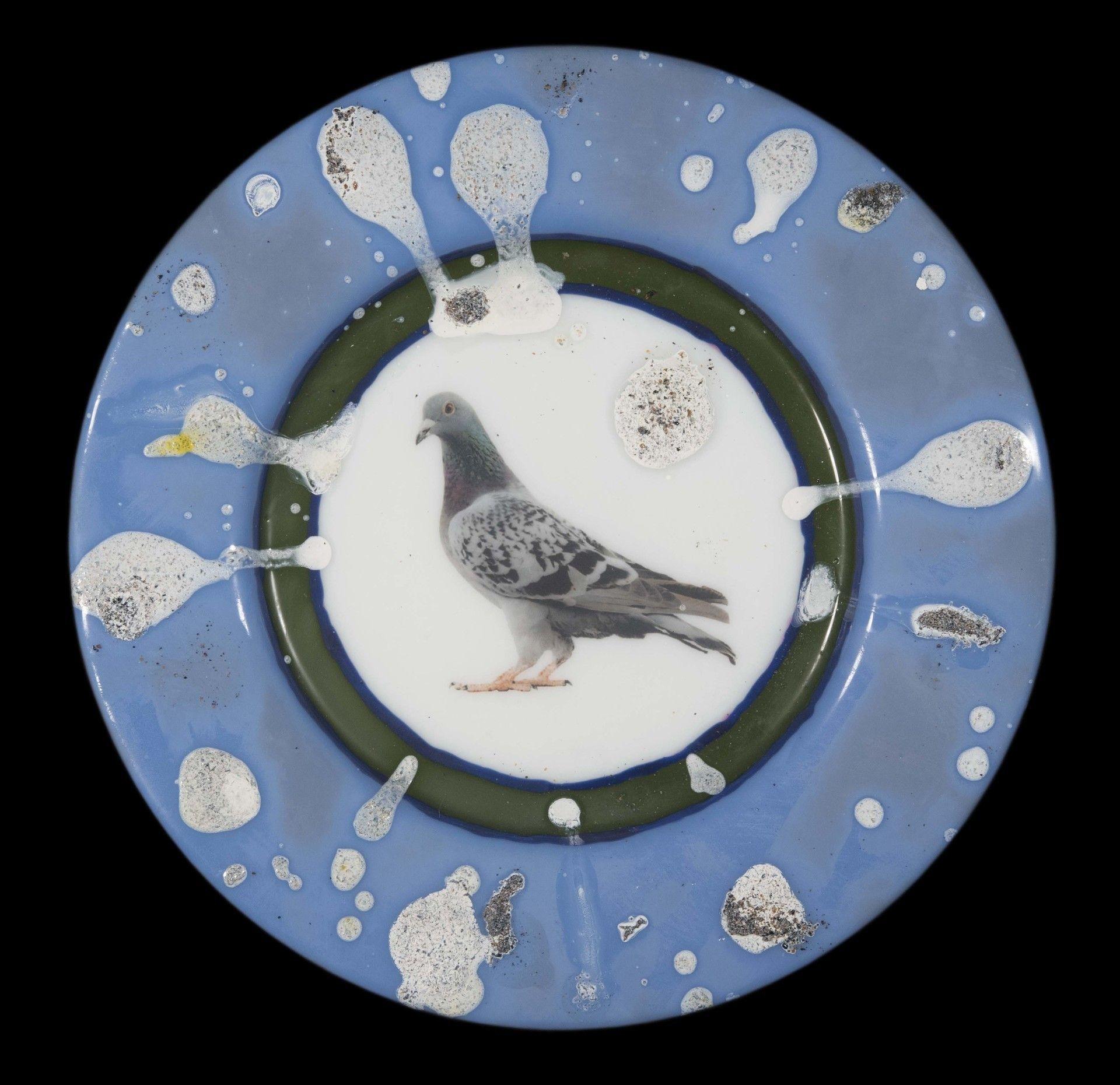 Commemorative Pigeon Plate v3