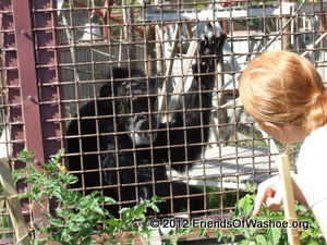 Shannon interacts with Tatu through the fencing outdoors