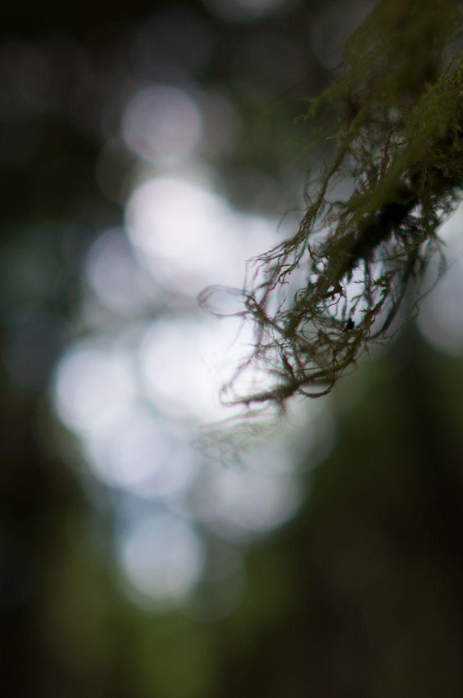 Rainbird 13, Moss Lace
