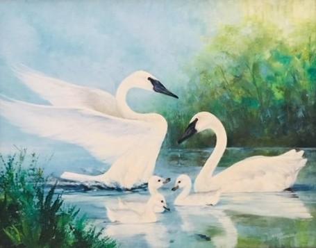 My Swan Story by David W.